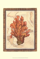 Exotic Map with Coral IV (D) Fine-Art Print