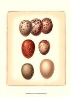 Bird Egg Study I Fine-Art Print