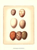 Bird Egg Study II Fine-Art Print