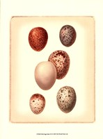 Bird Egg Study III Fine-Art Print