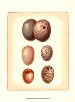 Bird Egg Study IV Fine-Art Print