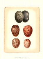Bird Egg Study V Fine-Art Print