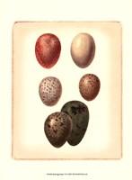 Bird Egg Study VI Fine-Art Print