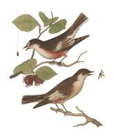 Antique Bird Pair I Fine-Art Print