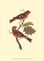 Antique Bird Pair II Fine-Art Print