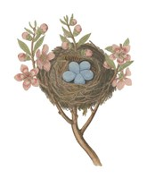 Antique Bird's Nest I Fine-Art Print
