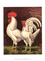 Cassell's Roosters VI Fine-Art Print