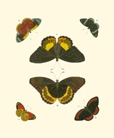 Butterfly Study I Fine-Art Print