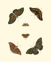 Butterfly Study II Fine-Art Print