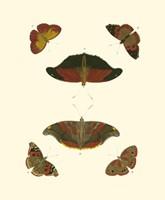 Butterfly Study III Fine-Art Print
