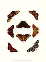 Butterfly Study IV Fine-Art Print