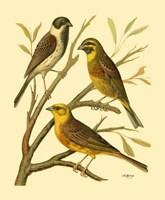 Domestic Bird Family I Fine-Art Print