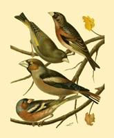 Domestic Bird Family II Fine-Art Print