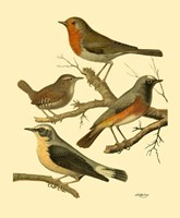 Domestic Bird Family III Fine-Art Print