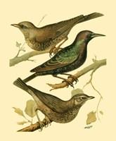 Domestic Bird Family IV Fine-Art Print
