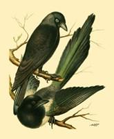 Domestic Bird Family V Fine-Art Print