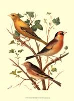 Domestic Bird Family VI Fine-Art Print