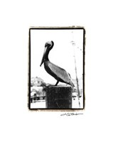 Pelican Perch Giclee