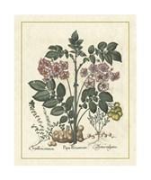 Floral V Giclee