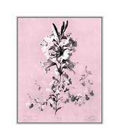 Lilium on Pink Giclee