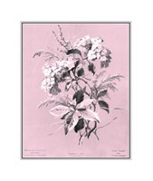 Hydrangea on Pink Giclee