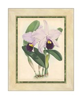 Orchid IV Giclee
