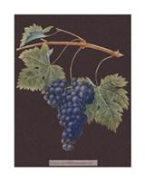 Purple Grapes Giclee