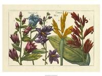 Botanical III Giclee