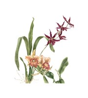 Orchid I (Le) Giclee