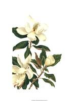 Magnolia I (Le) Giclee