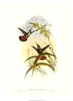 Hummingbird I Giclee