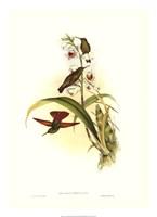 Hummingbird II Giclee
