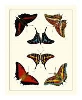 Butterflies II Giclee