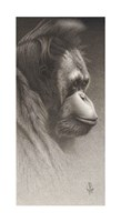 Jojo, The Orangutan Giclee