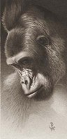 Silver Back, The Gorilla Giclee
