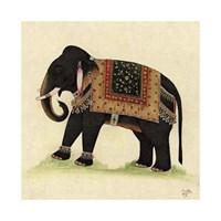 Elephant from India II Giclee