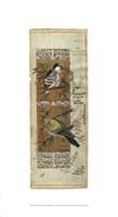 Bird Pair from India I Giclee