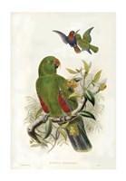Parrots I Giclee