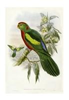 Parrots II Giclee
