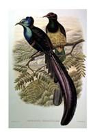 Bird of Paradise I Giclee