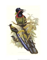 Bird of Paradise II Giclee