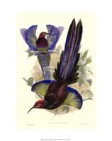 Bird of Paradise III Giclee