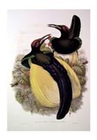 Bird of Paradise IV Giclee