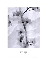 Cherry Blossoms in Winter Fine-Art Print