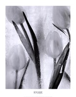 Tulips on Ice Fine-Art Print