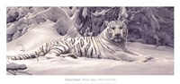 White Tiger Fine-Art Print