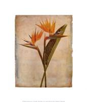 Oahu Fine-Art Print