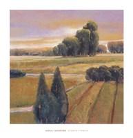 Summer Cypress Fine-Art Print