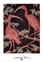 Scarlet Ibis 2 Fine-Art Print