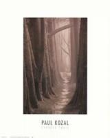 Cypress Trail Fine-Art Print